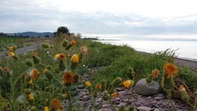 Steam Coast Trail, Coastal Path, Flowers, Exmoor, Somerset, Dog Walking, Dunster Beach Hut, Salad Days, Dunster