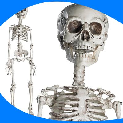 Esqueleto Decor