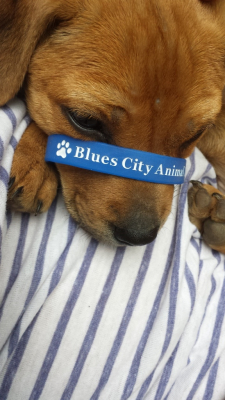 Blues city Animal Rescue Braclett