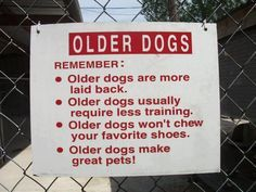 Adopting a older dog