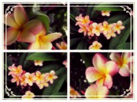 yellow pink white pretty collage quadruple