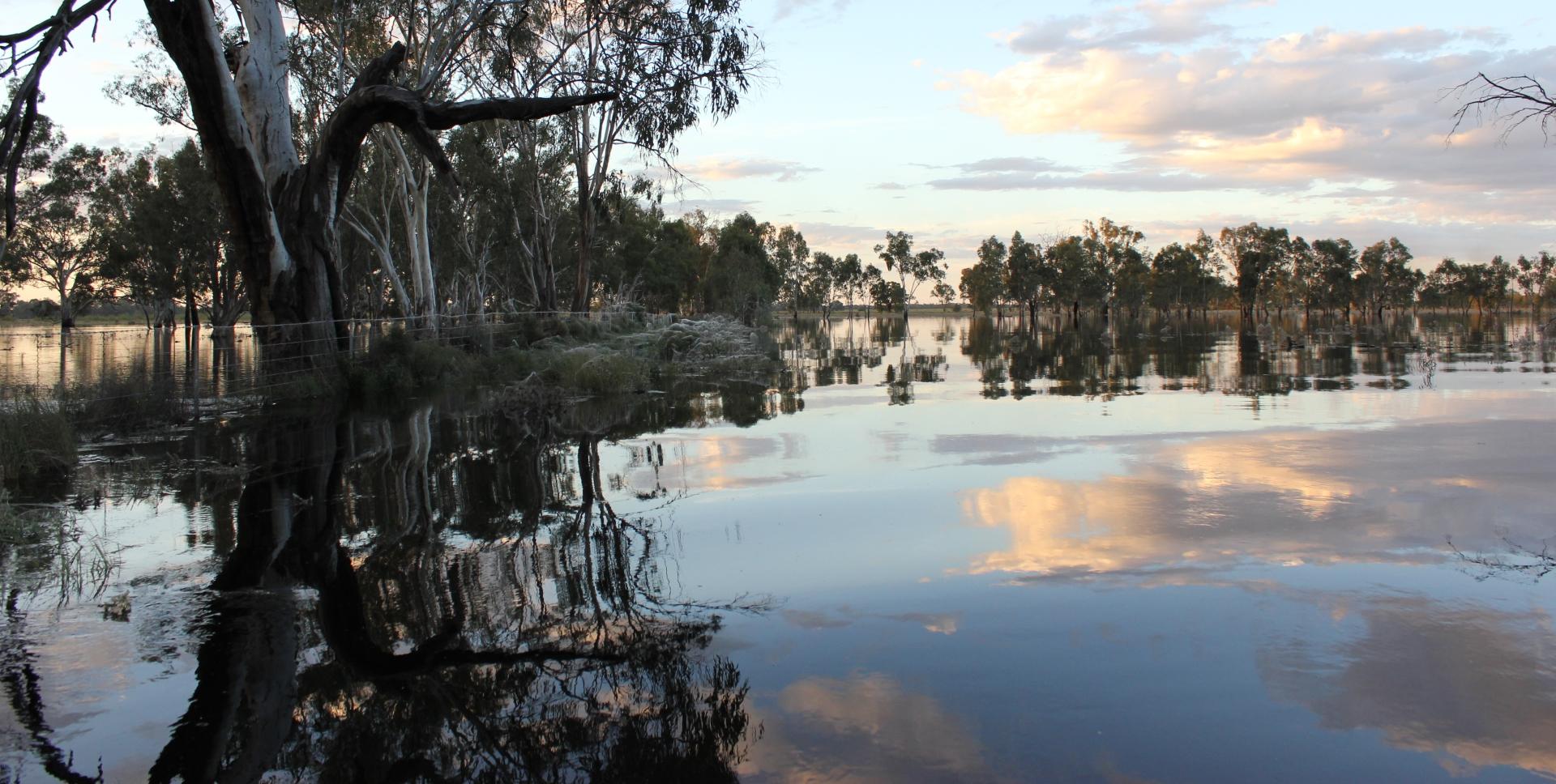 Serene waters at Yanga National Park