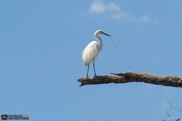 An elegant Egret is part of the wonderful wildlife in the region