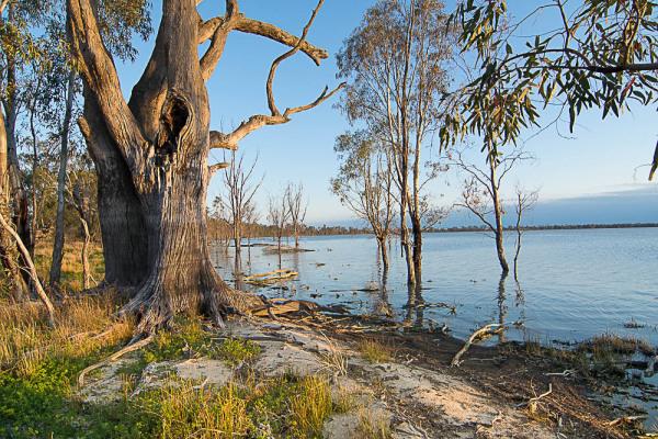 Yanga Lake at Yanga National Park