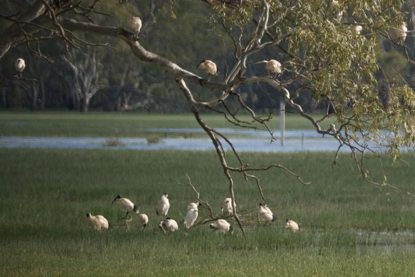 The Wetlands, Yanga National Park