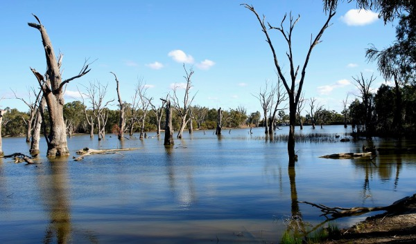 The Murray River at Euston