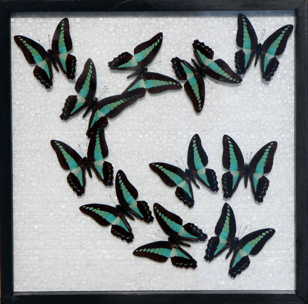 asian art imports framed blue butterfly