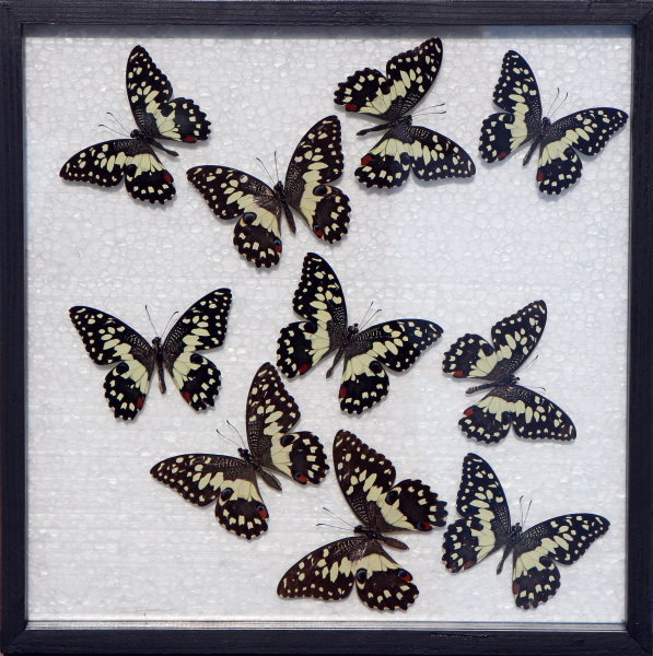 asian art imports framed yellow butterfly