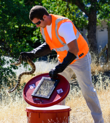 cody will will's skillz rattlesnake services removal relocation northern california
