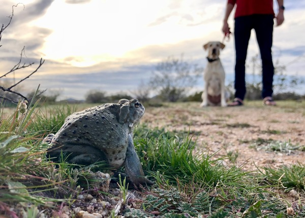 toad with dog in background