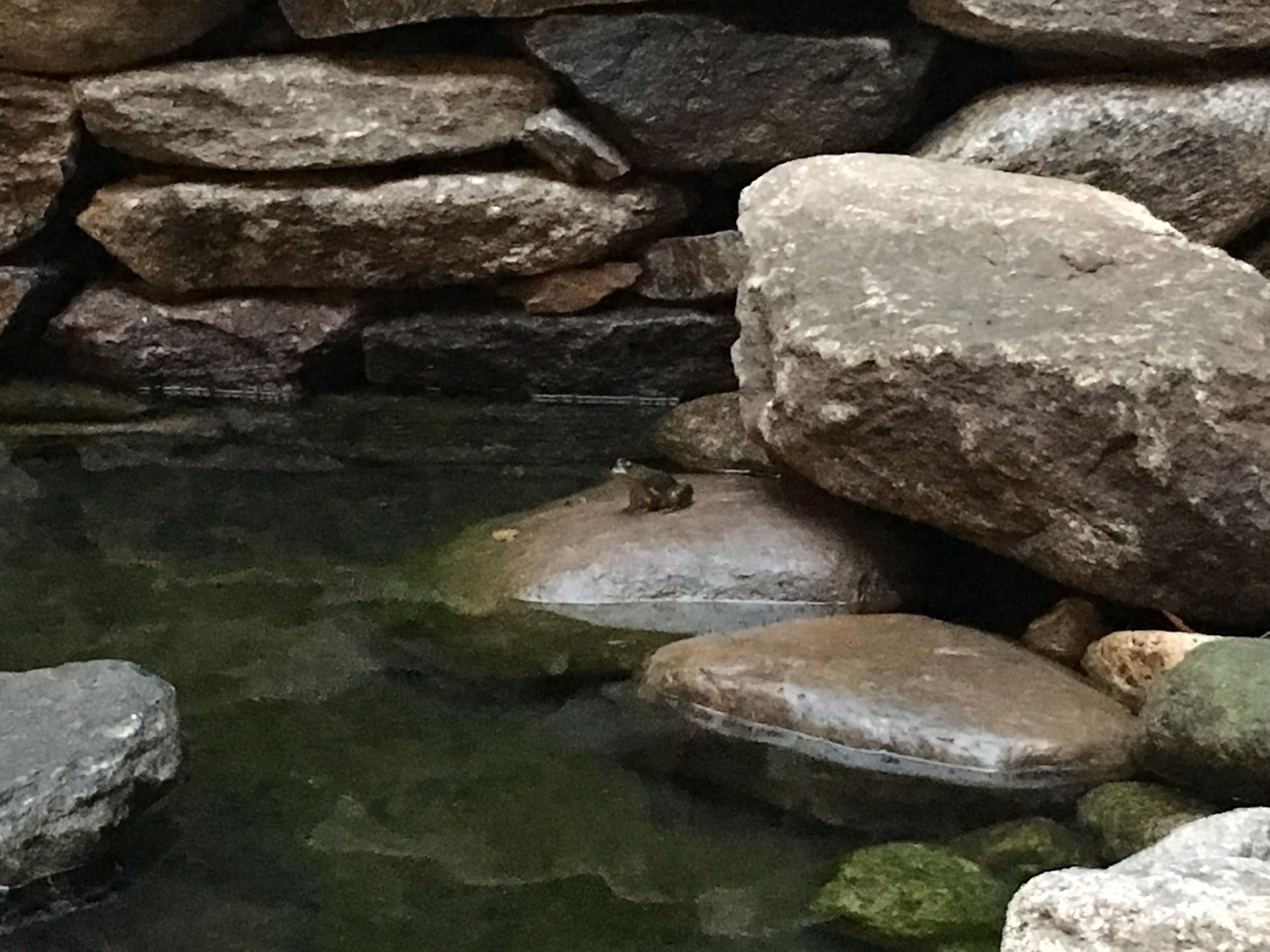 Small frog enjoying the pool