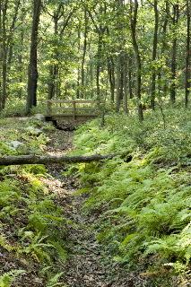 Woodland Trail