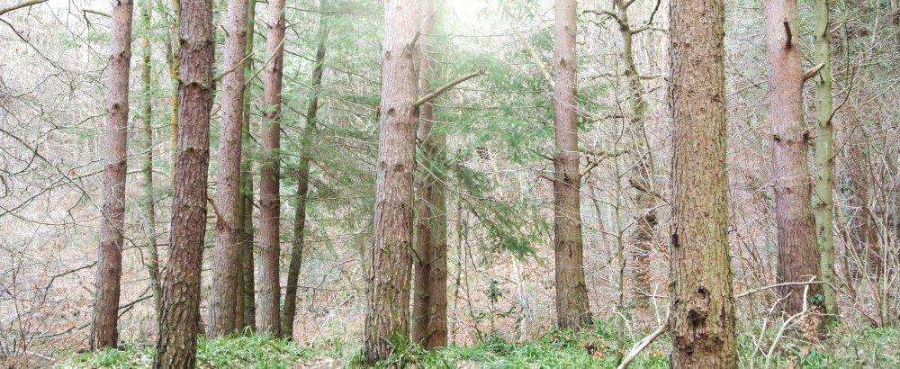 Esk Valley woodland