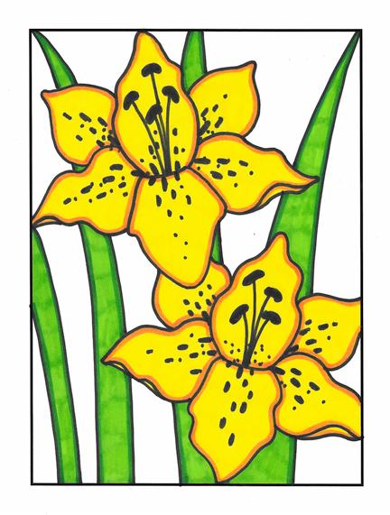 Louisiana Lilies