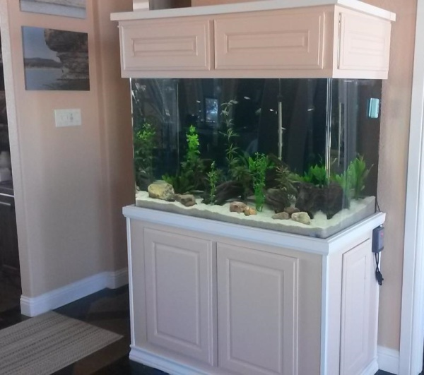 Dalton Construction Built in Aquarium