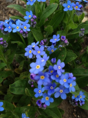 A reminder from Forget-me-Knots