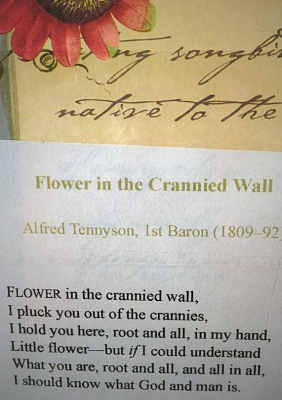 Lord Tennyson and Grandma