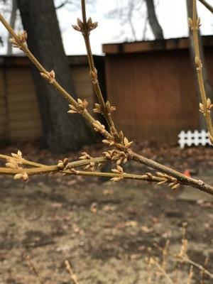 When November Blooms In April