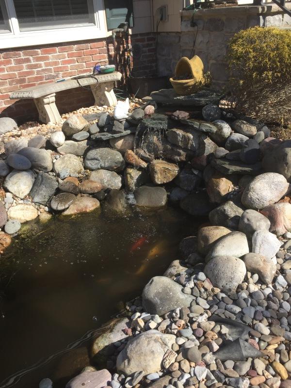 Spring Has Sprung-Pond Opening