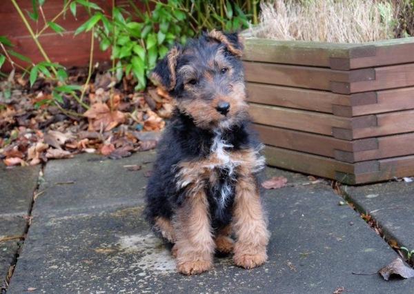 Puppy Life Skill Training