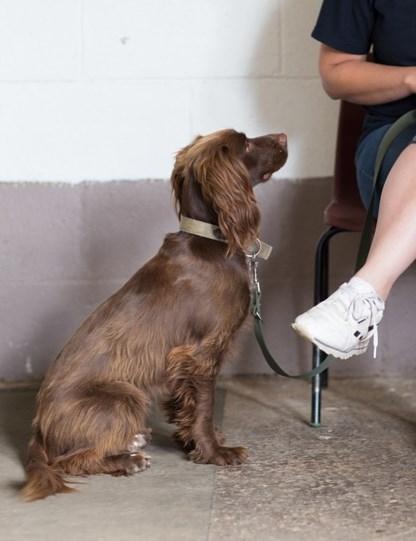 Pet Dog Life Skill Training