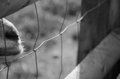 Gestalt Psychology and Photography Part 1