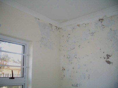 Damp Proofing Specialist Cape Town