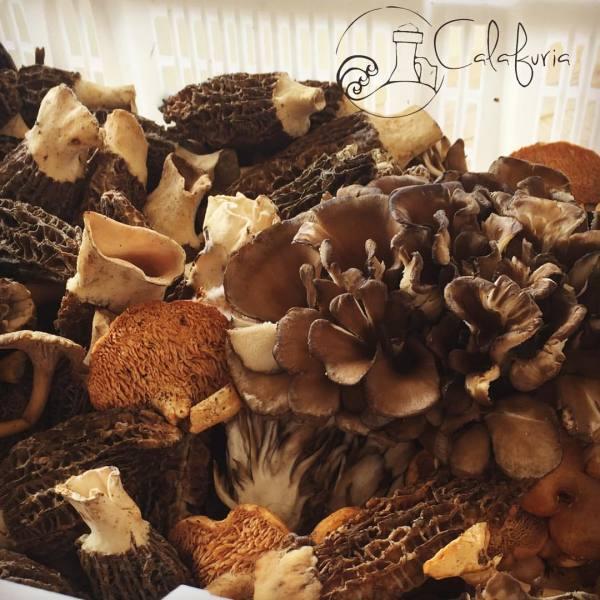 Mixed wild mushrooms