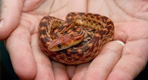 Python and Python bites