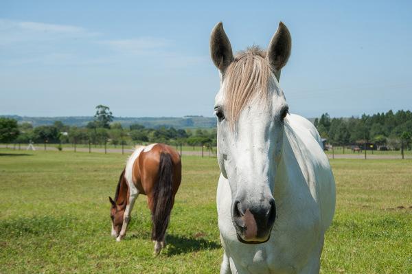 Jo-Jos Riding Centre Horses