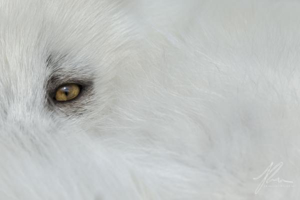 Deep White Fur