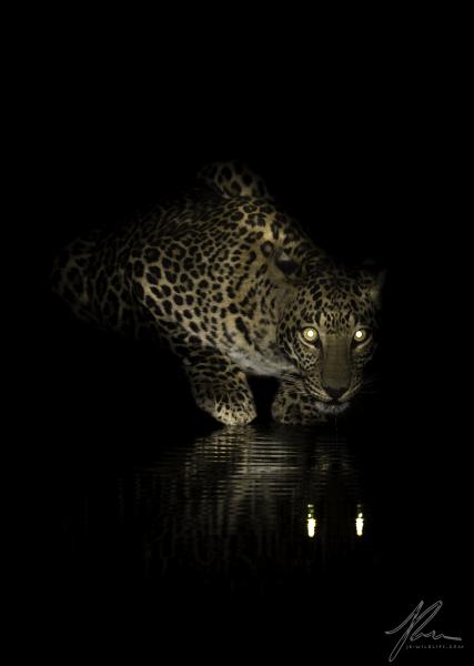 Leopards Eyes