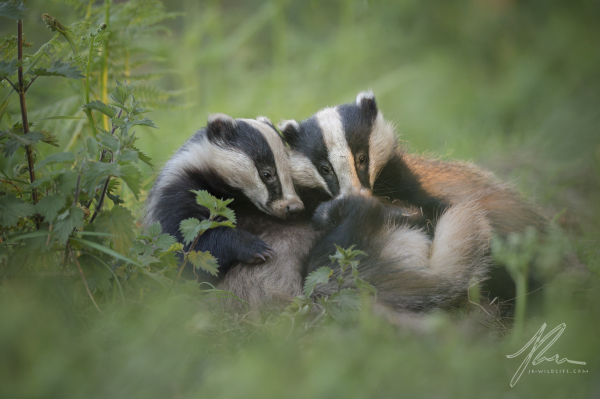 Badger Brothers