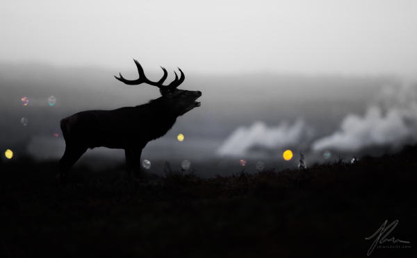 City Scape Stag