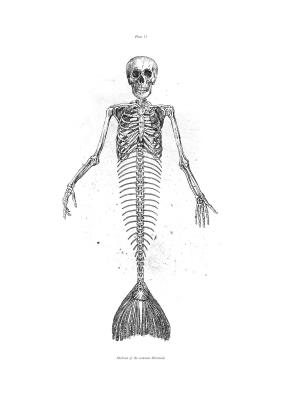 HYBRID SERIES: Mermaid (2016)