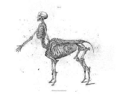 HYBRID SERIES: Centaur (2016)