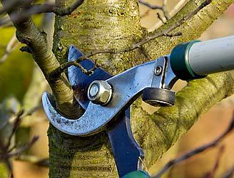 Tree & Shrub Prunning