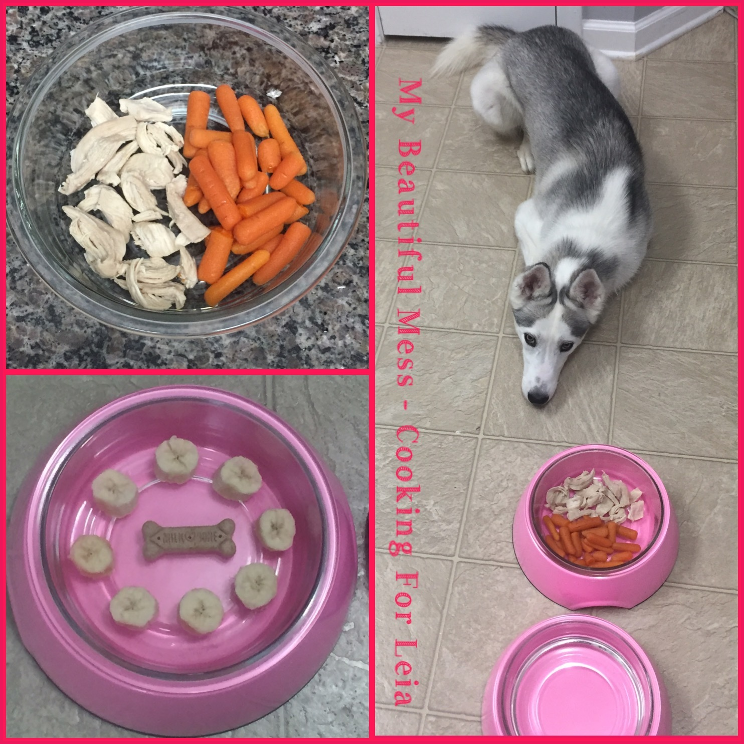 My Beautiful Mess - Cooking for Leia (my dog)