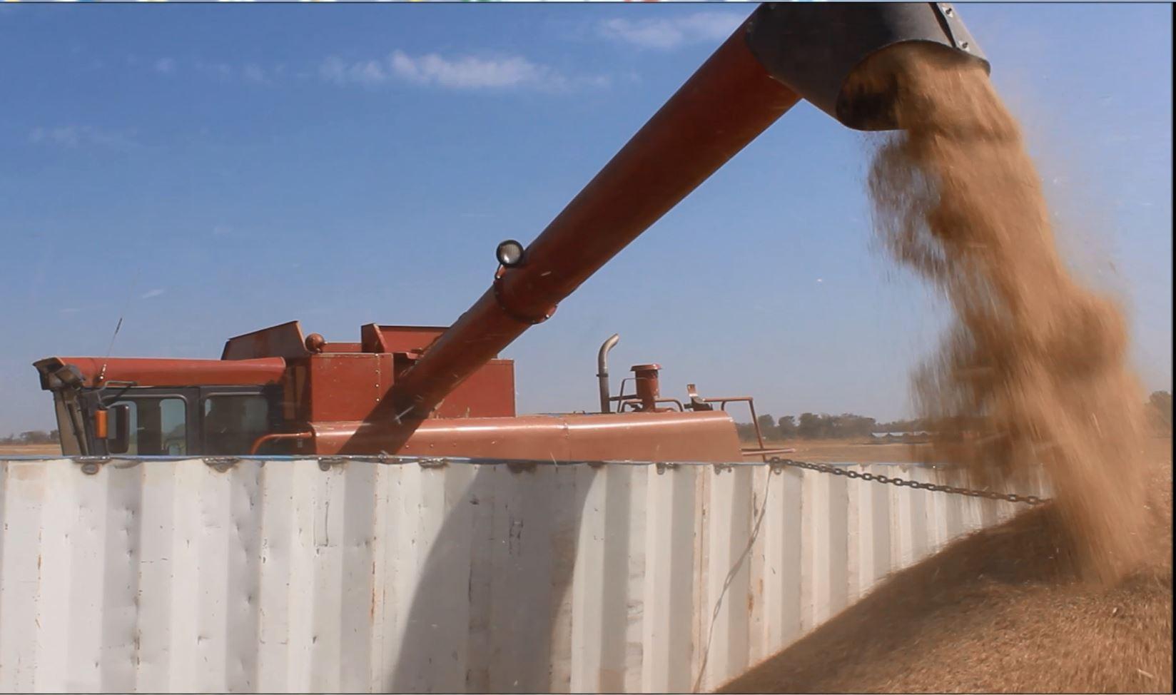 Harvesting the Crop