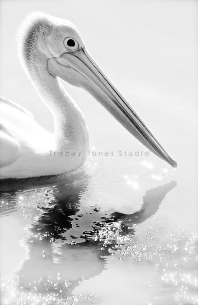 ...the pelican.