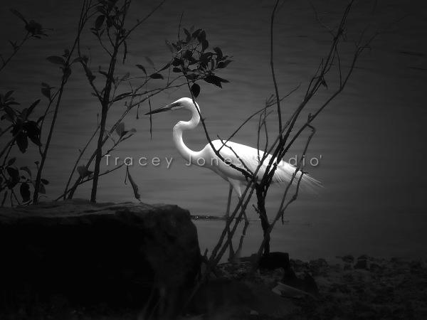...heron.