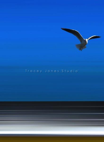 ...the gull.
