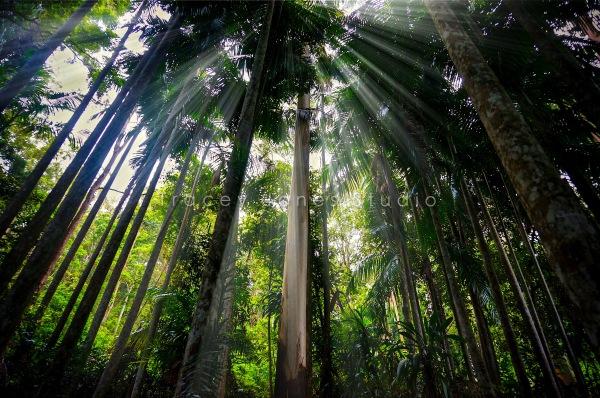 rainforest 1