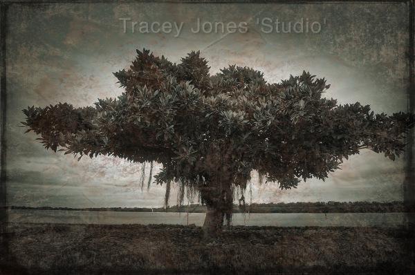 ...tree 1.