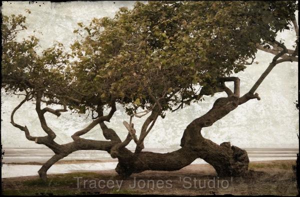 ...tree 2.