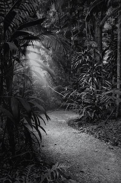 ...rainforest path.