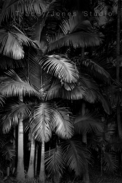 ...rainforestation 1