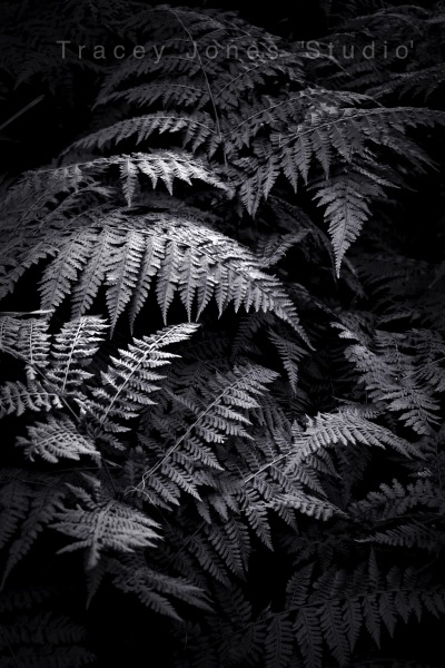...rainforestation 2.