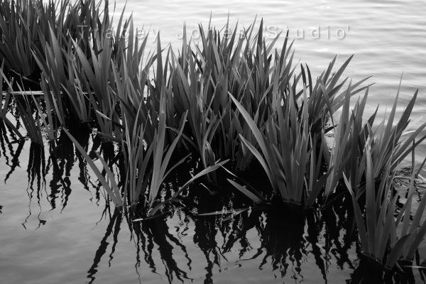 ...watergrass 1.
