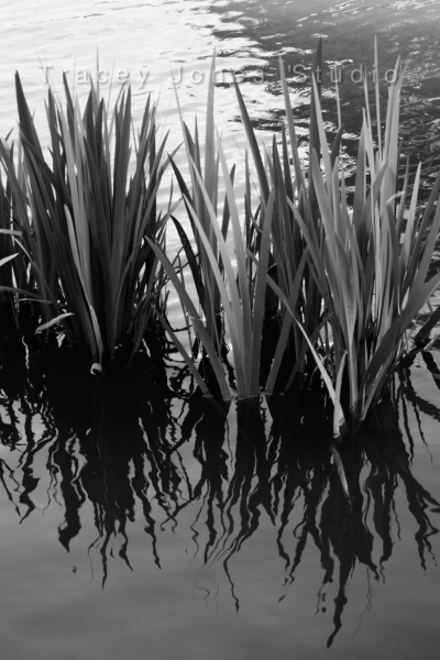...watergrass 2.